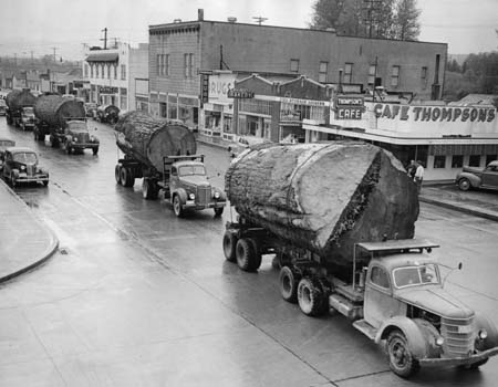 Caravan of trucks carrying Douglas fir logs through North Bend, Washington.