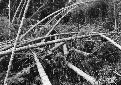1938 Hurricane damage.