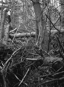 Survey damage from 1938 Hurricane.