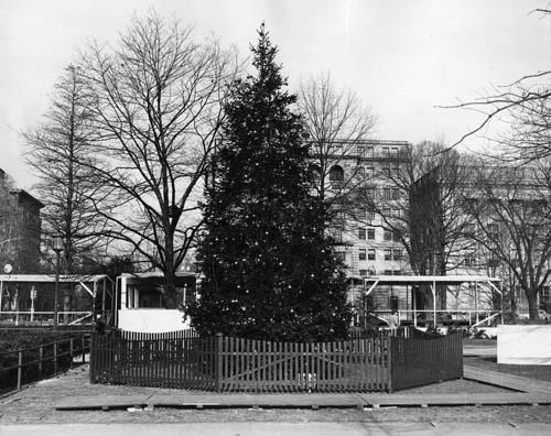1938 National Christmas Tree