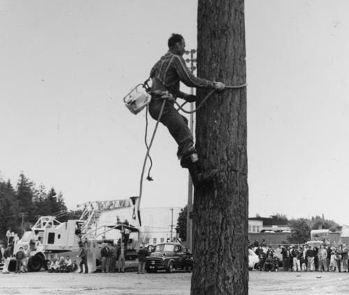 Tree climber Hap Johnson (Forest History Society)