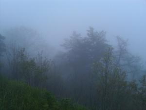 Curtis Creek view