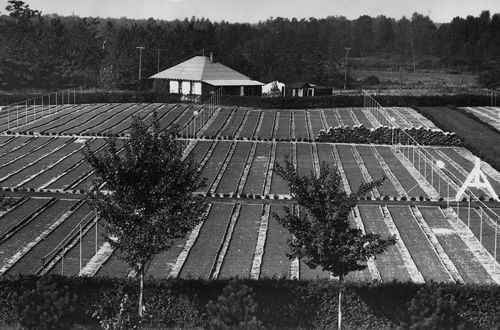 Beal Nursery in 1929