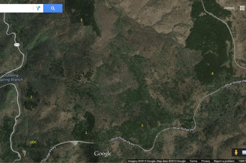 This satellite photo indicates where the forest is most likely located today by the #1. It's curious that there are other clusters of similar species in the vicinity, as indicated by #2-5.